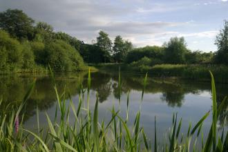 Severn Farm Pond Nature Reserve