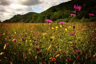 Summer meadows at Red House Nature Reserve copyright Montgomeryshire Wildlife Trust