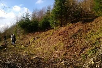 Managing Red Wood Ant habitat copyright Montgomeryshire Wildlife Trust