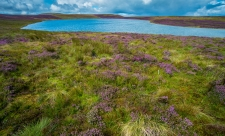 Glaslyn lake & blooming heather