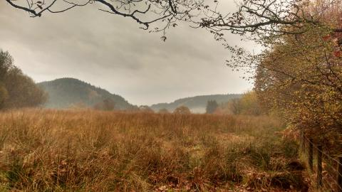 Dyfnant Meadows in autumn
