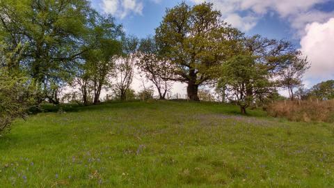 Dyfnant Meadows in spring