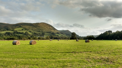 Hay big bales at Llandinam Gravels Nature Reserve