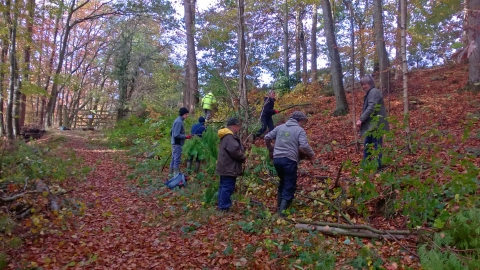 Volunteers coppicing at Dolforwyn Woods copyright Montgomeryshire Wildlife Trust