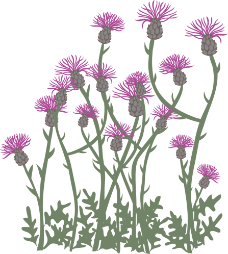 Wildflower illustration