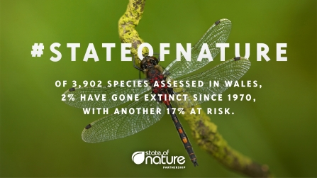 State of Nature 2019 Wales message dragonfly