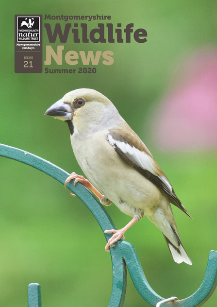 Cover of the Summer 2020 issue of Montgomeryshire Wildlife News MWT's newsletter