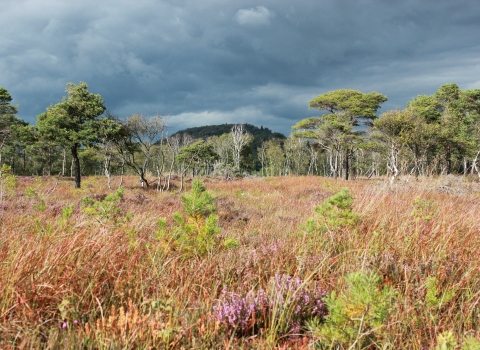 Meathop Moss nature reserve, Cumbria Wildlife Trust