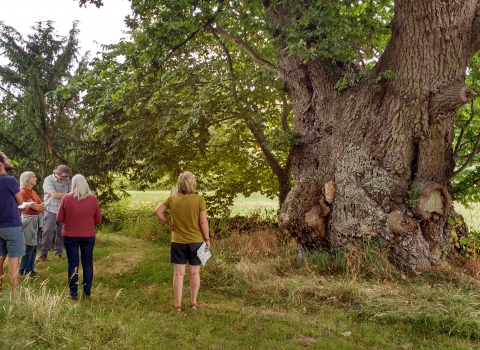 Veteran oak surrounded by admirers copyright Montgomeryshire Wildlife Trust
